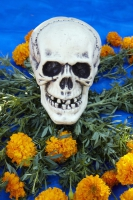 Scull surrounded by marigolds at Day of the Dead (Dia de los Muertos) at Hollywood Forever Cemetery